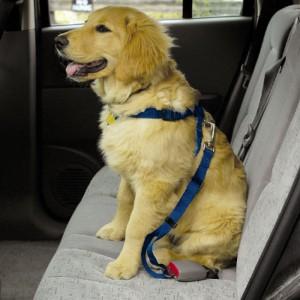 dog$20car$20harness
